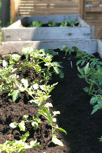 New plants in a raised garden bed