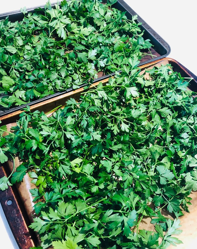 I had a lot of cilantro so I washed and dried it and put it on  trays to freeze
