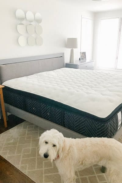 New Sealy Mattress with Lola the photobomber